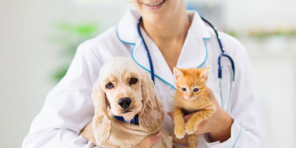 UIS Insurance & Investments - Pet Insurance